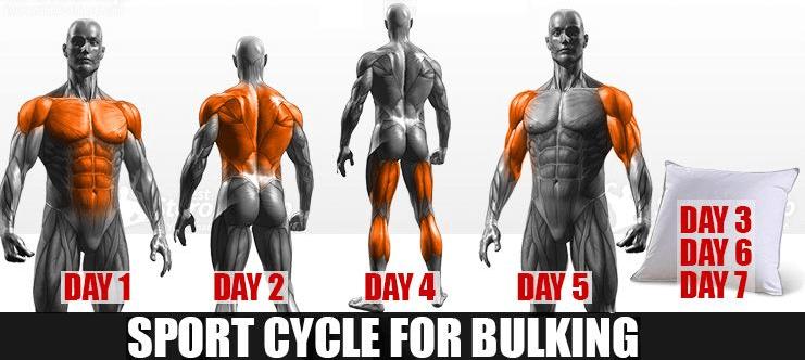 bulk-cycle